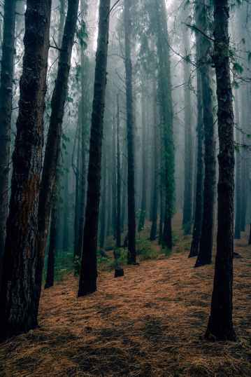 photo of trees in forest